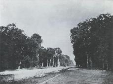 Gustave Le Gray; Road Through the Forest; 19th century