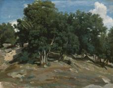 Jean-Baptiste-Camille Corot; Fontainbleau: Oak Trees; 1832-33; oil on paper, laid down on wood; 39.7 x 49.5 cm; The Metropolitan Museum of Art