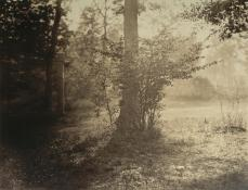 Gustave Le Gray; Tree Study, Forest of Fontainbleau; c.1856; albumen silver print from glass negative; 31.8 x 41.4 cm; The Metropolitan Museum of Art