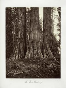 Carleton E. Watkins; The Three Graces, 272 feet; c.1876; The Metropolitan Museum of Art