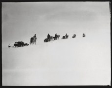 Scott, R F Antarctic , Dec. 2, 1911. Scott captured the straggle of ponies veiled in the icy wilderness. Many of the men in this image would return, but not all. None of the ponies would- Within a few days they would be shot.