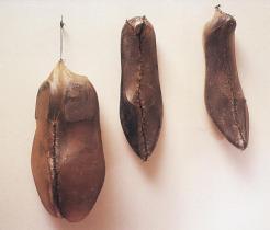 Doris Salcedo; Untitled; 1989
