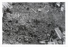 "Ingwill M Gjelsvik Burial mound 1 - 1 pencil on paper 2009 22 "" x 29 """