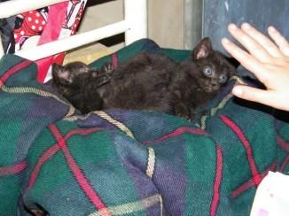nuevos-inquilinos-gatos-8