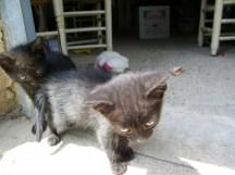 nuevos-inquilinos-gatos-4