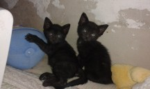 nuevos-inquilinos-gatos-1