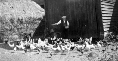 Feeding Hens at Minmere Barn