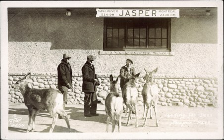 Feeding the deer, Jasper Park. Photographed and Copyrighted by G. Morris Taylor, Jasper, Alberta, 1947. peel.library.ualberta.ca/postcards/PC008224.html