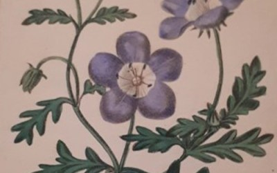 The Bromsgrovian botanist who earnt His 'Majesty's admiration'