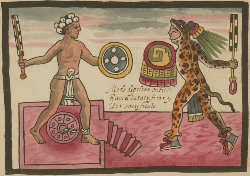 the Codex Tovar depicts a scene of Aztec gladiatorial sacrificial rite, celebrated on the festival of Tlacaxipehualiztli.