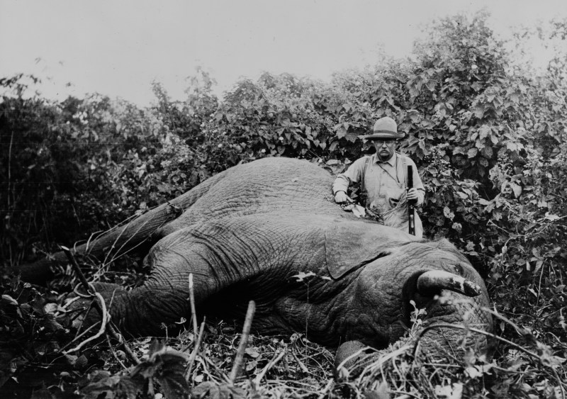 Former President of the United States, Theodore Roosevelt, stood next to a Elephant that he had just hunted during his 1909 African Expedition.