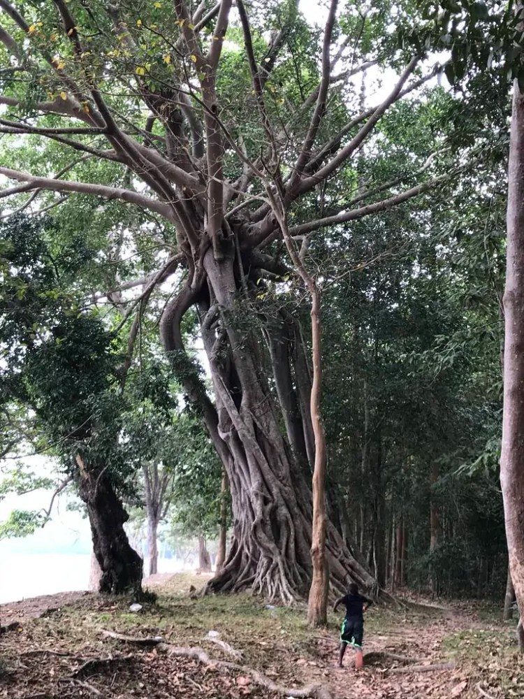 Cambodia - Siem Reap - Nature Hike - Collab Entry