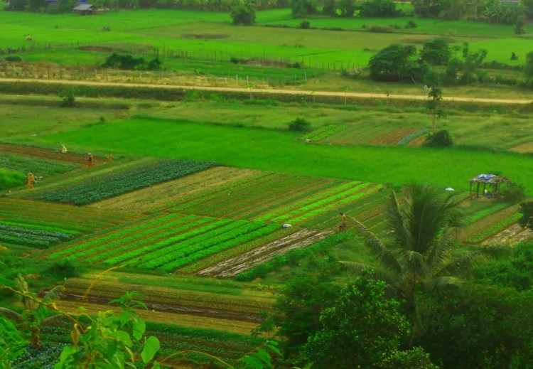 Cambodia - Seim Reap - Homestay - Collab Contribution