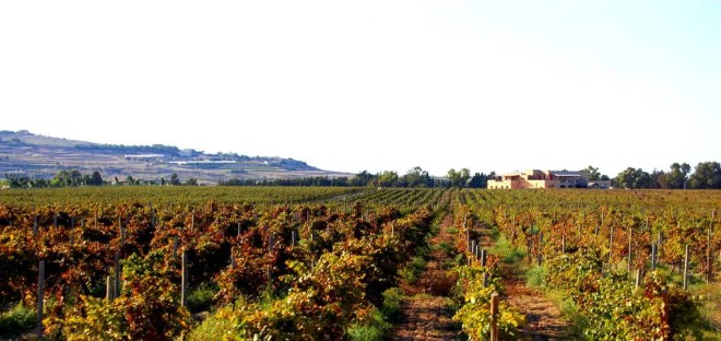 A Maltese Vineyard
