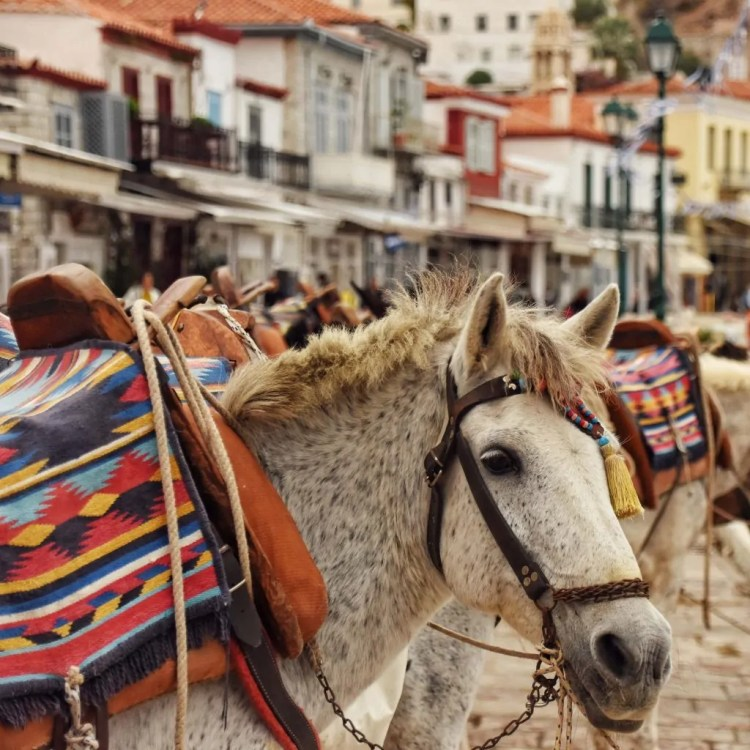 A Donkey on the island of Hydra. The island doesn't have cars, so there are donkey taxis for tourists.