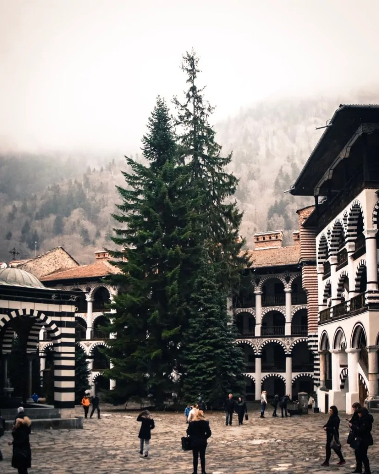 A regal tree growing in Rila's courtyard