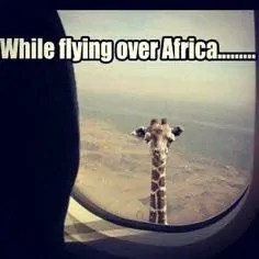 Africa Travel Meme