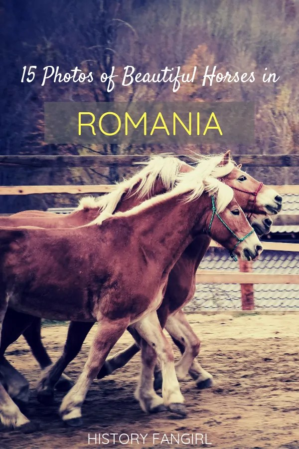 Photos of Horses in Romania