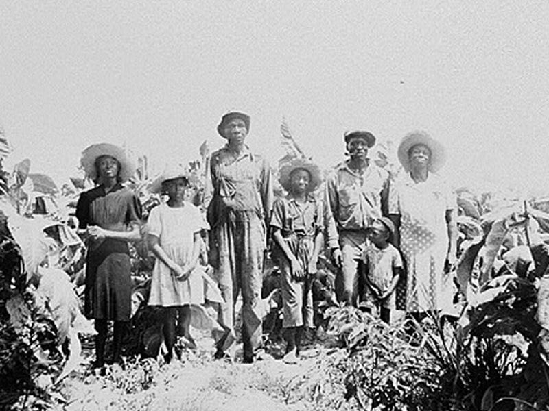 Sharecroppers in Georgia · Textbook