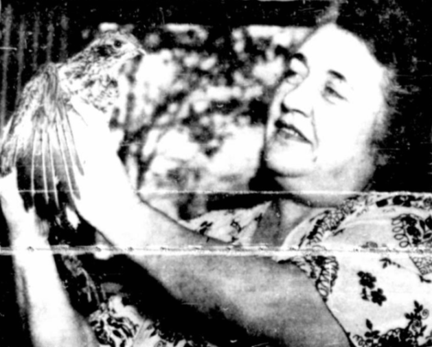 Irene Viau poses with a partridge she caught in her sunroom at 323 Metcalfe. Source: Ottawa Citizen, October 19, 1951, p. 10.
