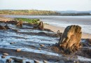 Science: Human footprints 7,000 Years old found in Britain (with ancient forest)