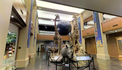 Monte L. Bean Life Science Museum | Brigham Young University