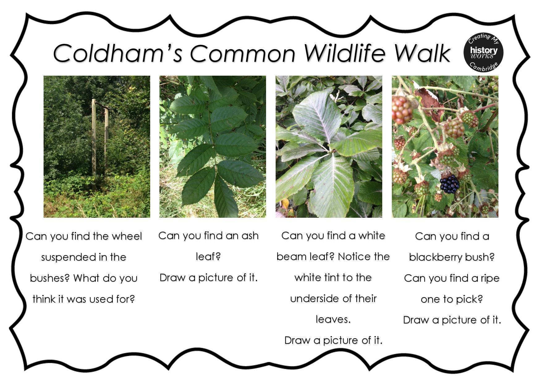 Wildlife Trail On Coldham S Common Creating My Cambridge