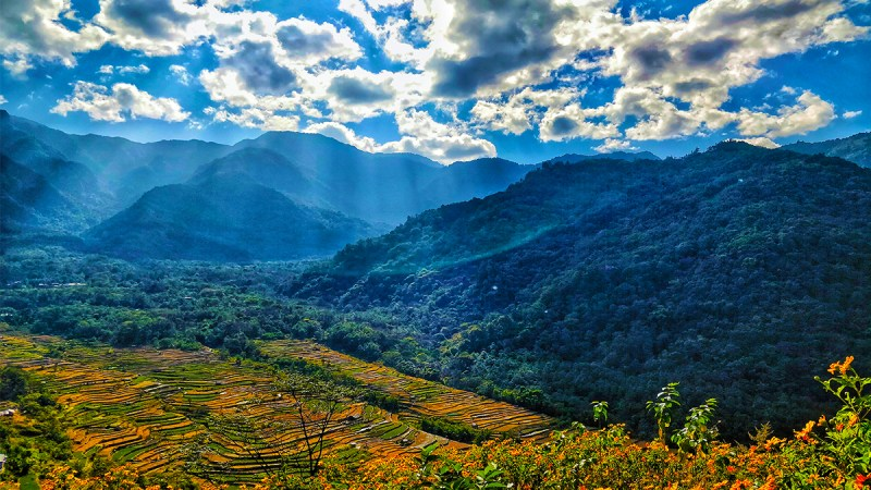 Places to visit in Nagaland - Rice fields at Khonoma Village