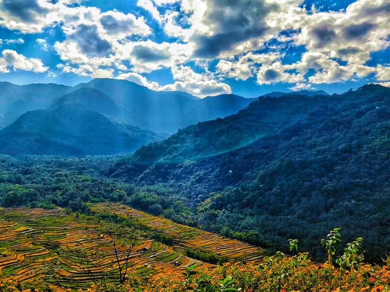 Rice fields at Khonoma Village