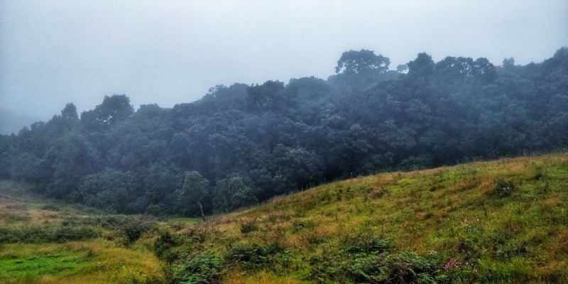 Forest covered in fog - Mawphlang sacred forest - india adventure