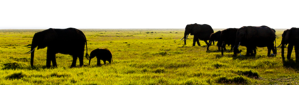 Safari im Amboseli National Park