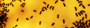 Bees on a filled in honey comb