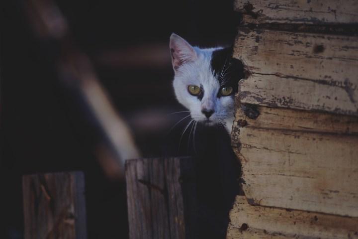 sneaky-cat