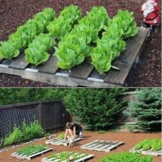 Зеленчукова градина на двора