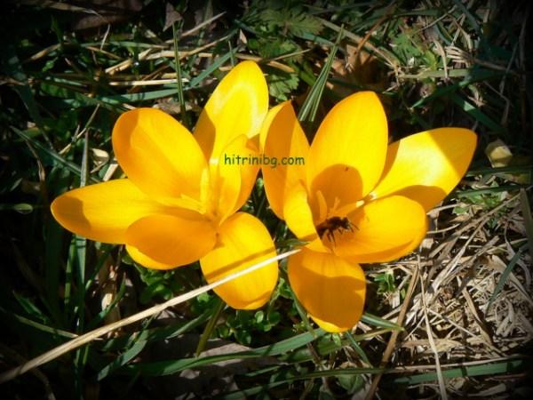 градината през март