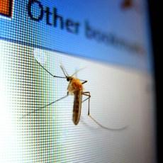 Комари - как да се предпазим