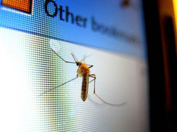 комари