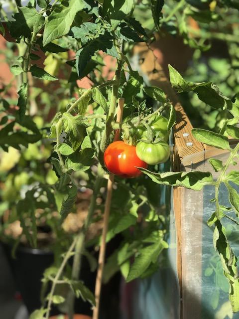 Gör egen tomatsås