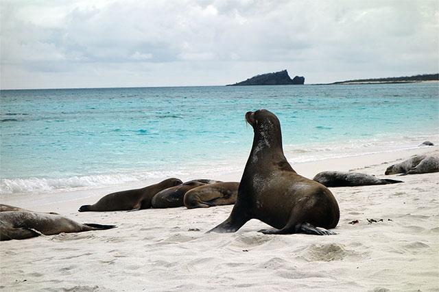 Emil_USA_Galapagos_sal640