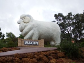 The Big Ram, Wagin, inland away from the storm