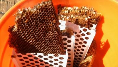 Honeycomb in bucket.