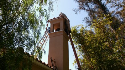 Technician at the top of a chimney removing a beehive.