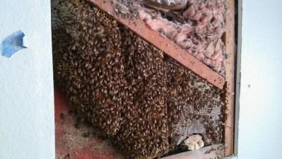 Beehive inside wall.