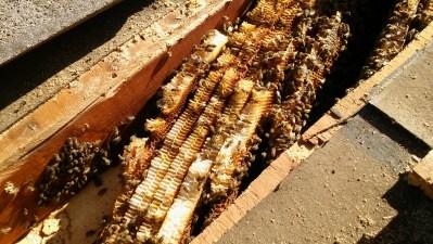 Beehive inside roof.