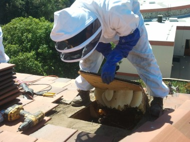 Honeycomb removal in Claremont out of a roof.
