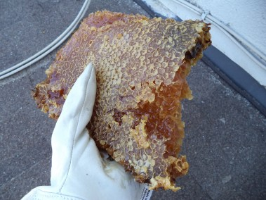 Chunk of honeycomb removed from beehive in Torrance.
