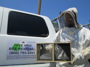 Bees in a cage after live bee removal in San Dimas.