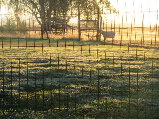 Morning Sunrise 028