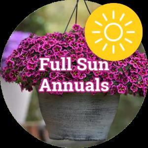Full Sun Annuals