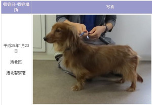 横浜市動物愛護センターが1月23日夕方にサイト上で公開した写真